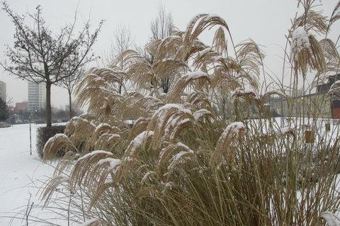 FOTKA - Zima, zima, zima všude je veliká. koho smích nehřeje, ten to rýmou odpyká