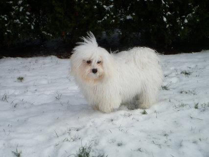 FOTKA - Ve sněhu