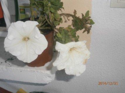 FOTKA - už byly vyhozeny - opět kvetou