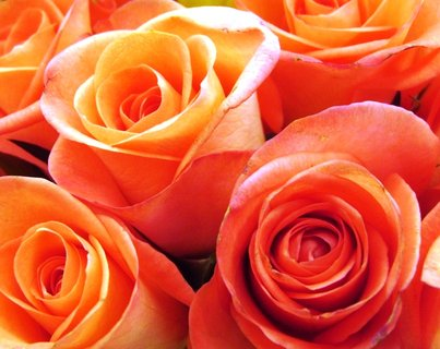 FOTKA - detail květů růží