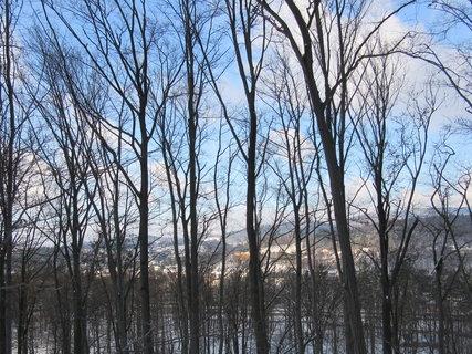 FOTKA - řada stromů nad Rožnovem