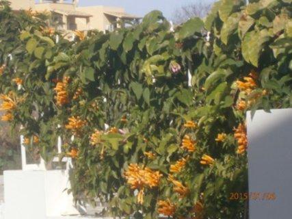 FOTKA - kvetou pouze v zimě