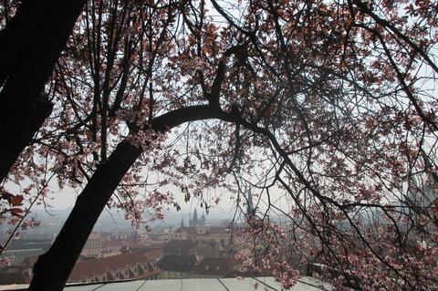 FOTKA - Jarní