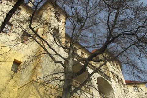 FOTKA - Ze zahrad pod hradem - pohled vzhůru