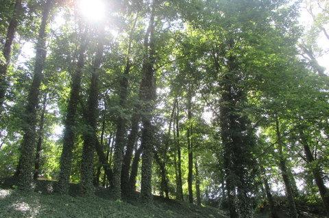 FOTKA - Trocha slunce a zeleně do zamračeného dne - září