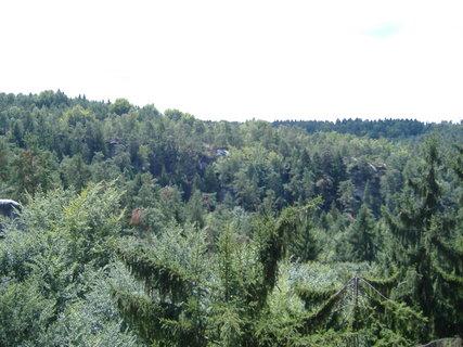 FOTKA - vrcholky stromů ze skal focené
