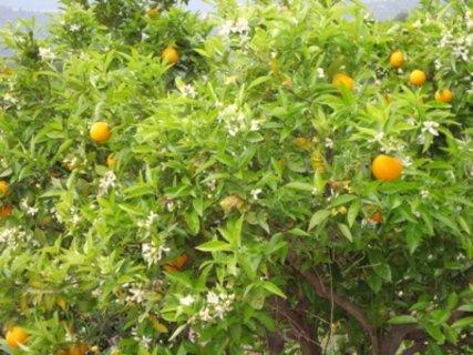 FOTKA -  plody i květy současně