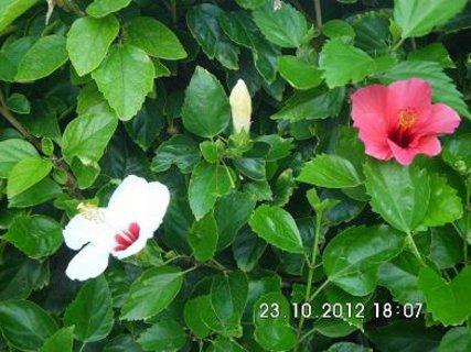 FOTKA - kveteme i v listopadu