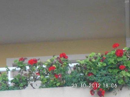 FOTKA -  listopad na balkoně