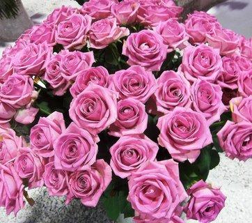 FOTKA - Růže na Floře v Olomouci