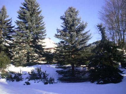 FOTKA - Jehličnaté stromy