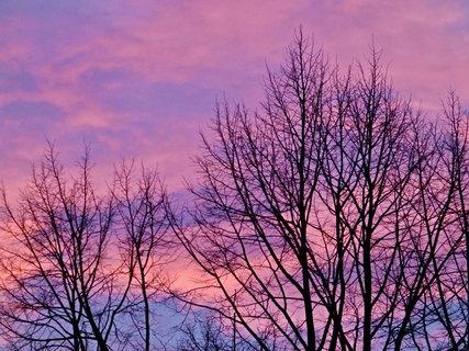 FOTKA - Růžové nebe