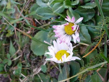FOTKA - Sedmikrásky taky kvetou