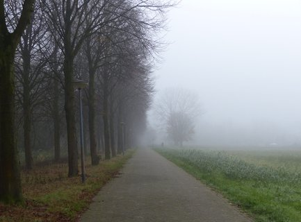 FOTKA - mlha vsude