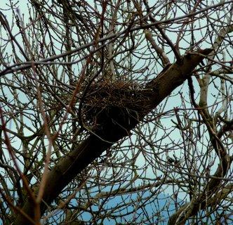 FOTKA - Hnízdo nepořádných vran