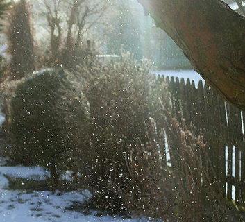 FOTKA - zmrzlá mlha na zahradě