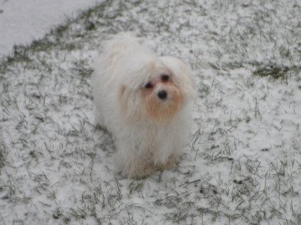 FOTKA - Tak málo sněhu.....?