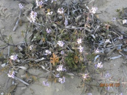FOTKA - přímo na pláži a kvetou i v lednu
