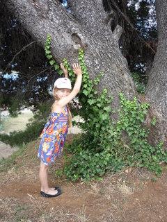 FOTKA - Ája a borovice