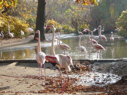 FOTKA - z podzimní návštěvy ZOO