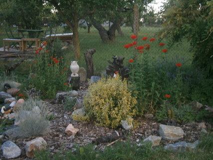 FOTKA - kouzlo zahrady