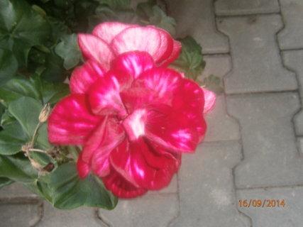FOTKA - krásný květ