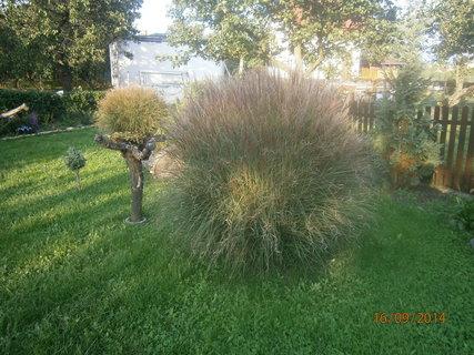 FOTKA - zátiší s travinou