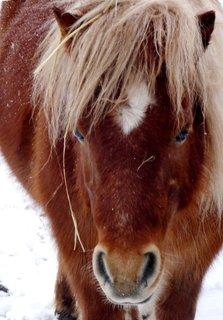 FOTKA - Bloňďatá čupřina poníkova