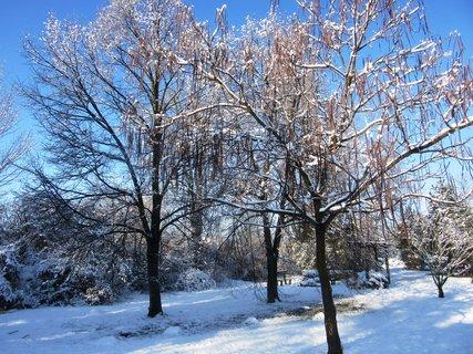 FOTKA - zimní krása v parčíku