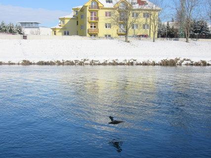 FOTKA - zima u ř. Moravy