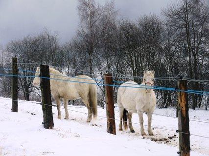 FOTKA - Koně v Ostružné