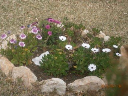 FOTKA - trávníky u věžáků jsou zdobeny kytkami