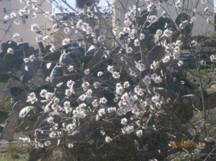 FOTKA - nejdříve květy, pak teprve listí