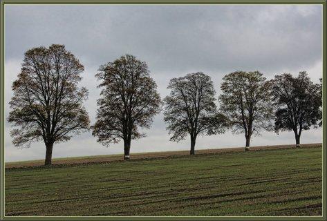 FOTKA - Stromořadí u Bednárečka