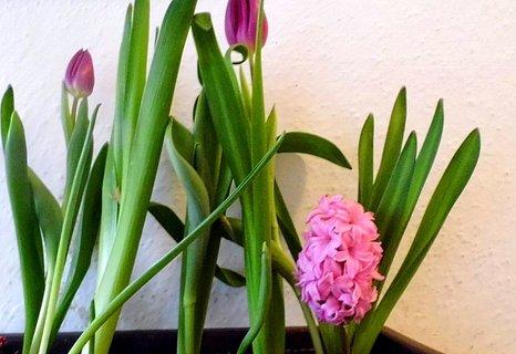 FOTKA - Další jarní truhlík kvete