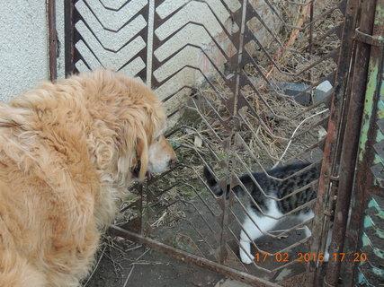 FOTKA - Seznamujem se, raději přes plot