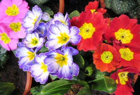 FOTKA - tři v květináči