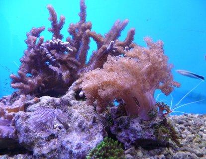 FOTKA - Korály - akvária Děčín
