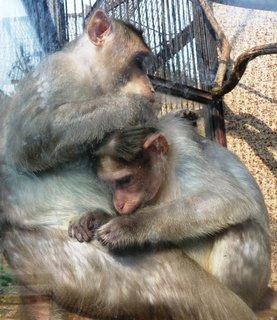 FOTKA - Opičí toaleta