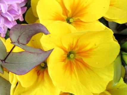 FOTKA - žluté v květináči