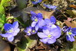 bleděmodré jaro