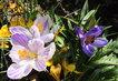 dvacátého prvního března ..na zahradě