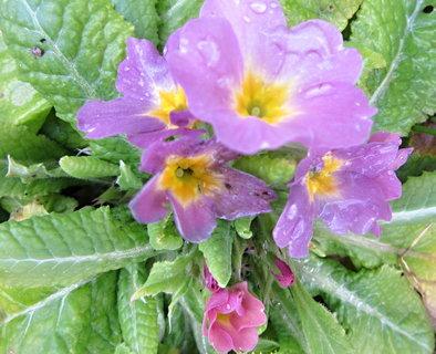 FOTKA - kvetou venku