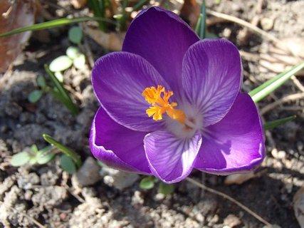 FOTKA - fialový sa rozvil