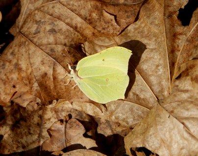 FOTKA - První letošní motýl!