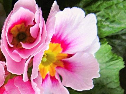 FOTKA - květy  v květináčku