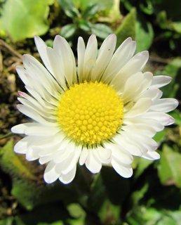 FOTKA - Kvetou hodně