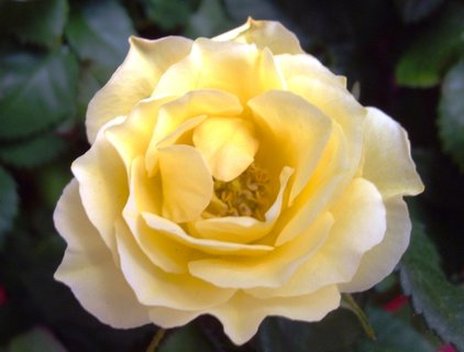 FOTKA - všem Růžičkám