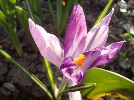 FOTKA - má zvláštne lupene