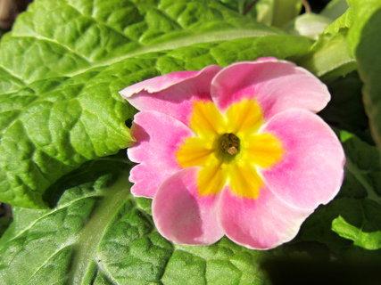 FOTKA - už je venku i s květináčkem